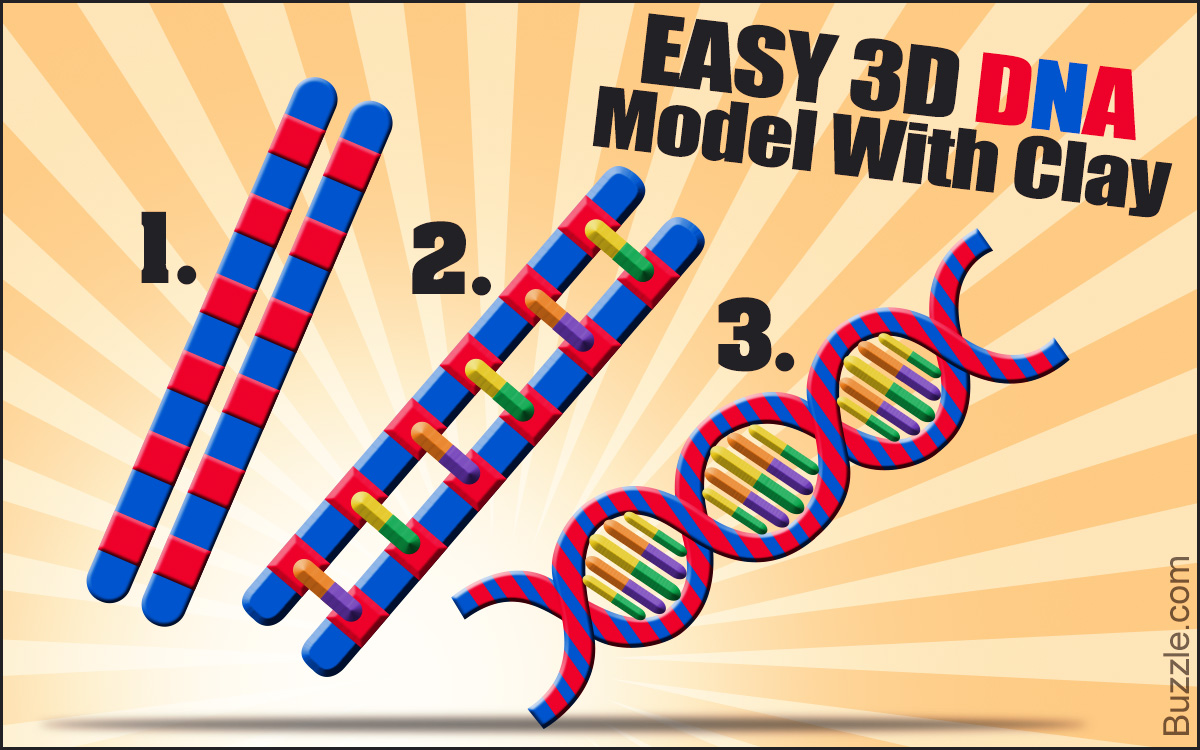 How to Make a 3D DNA Model Project