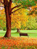 Картинка осень в саду – Картинки осень сад, Стоковые Фотографии и Роялти-Фри Изображения осень сад