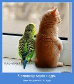 Фото для позитива – Позитивные картинки и красивые фото (76 фото)