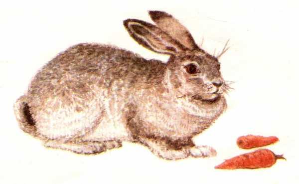 Картинка для детей зайчонок – Ой!