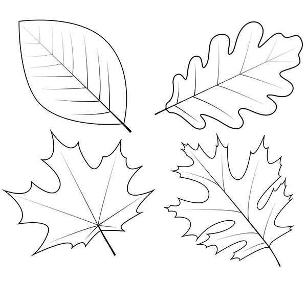 Осен рисунки – » » 24